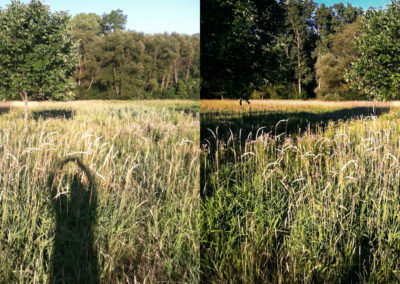 Field-A-Before-After